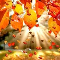 autumn landscape leavs colorful photography