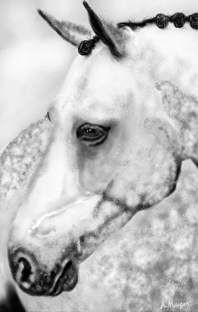 #wdpsketchportrait All drawn no stickers used @pa.  My first entry for sketch portrait 😊  #blackandwhite  #beautiful  #horse  #grey  #dappled  #sketch  #draw 😊❤💚