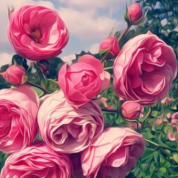 flower oilpainting summer pink flowershot