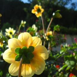 photography flower msflowers цветы