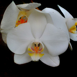 flower orchid nature photography