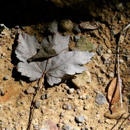 freetoedit leavesontheground autumn photography september2016