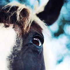 horse eyeshot bokeh