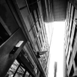 blackandwhite photography streetphotography urban urbanart