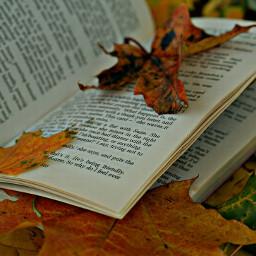 книга осень листья