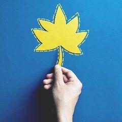 fail leaf hand drama dramaeffect freetoedit