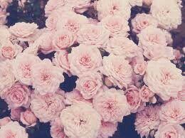 Rosas Bonitas Tumblr Image By Iingriid04