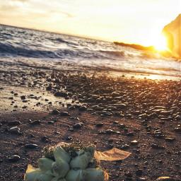 beach nature flower wppsky