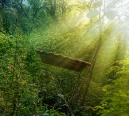 levitation sunlight sunrays overlay forest freetoedit