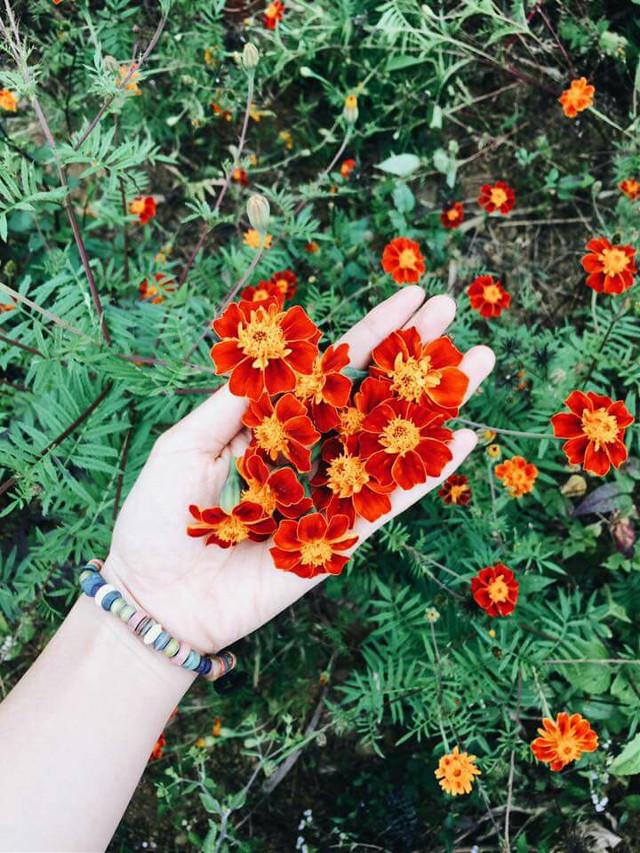 #FreeToEdit  #hagiang  #wildflowers #daisy
