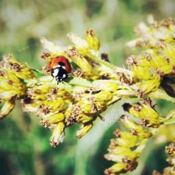 ladybug sunshine nature