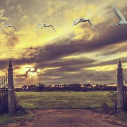 netherlands landscape whiteswan monumental gate freetoedit