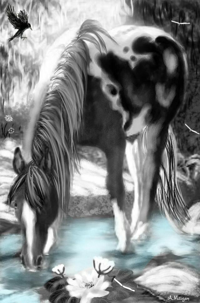 "#wdptwotone  ""Heavenly blue creek ""  #blackandwhite  #colorsplash  #country  #creek  #water  #drink  #horse  #coloured  #birds  #dragonflies  #peaceful  #draw 😊💚❤🐎"