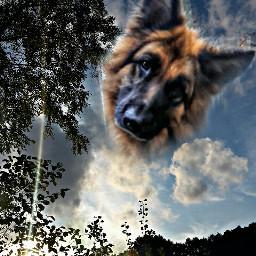 good photography sky hdr1 germanshepherd