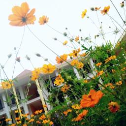 freetoedit lifestyle autumn flowers colorful