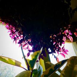 indoorphotography indoorplant beauty hangingflowers windows