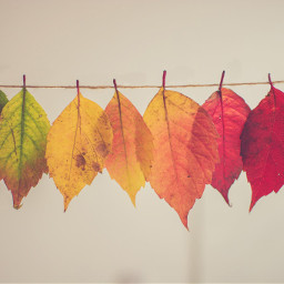 freetoedit leaves texture background colorful