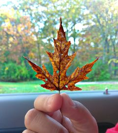 naturelover freetoedit leaf lovely illinois