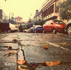 fall rain leaves cars warmambereffects