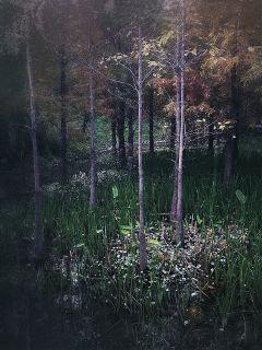 nature park autumn oldphoto retro