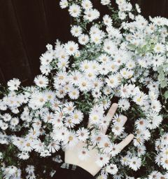 freetoedit flowers photography naturephotography nature