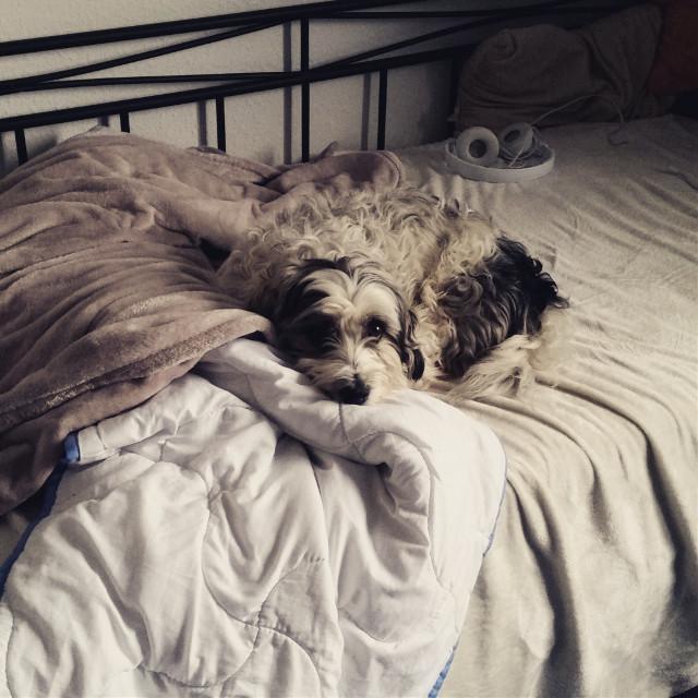 #animal #dog #doggy #tiere #hunde ^^