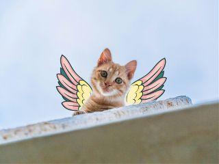 freetoedit cat kitty wings sweet