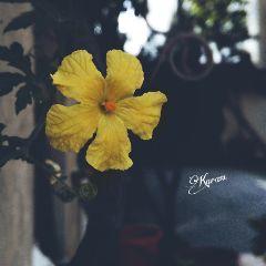 photography naturelover myclick flower yellow freetoedit