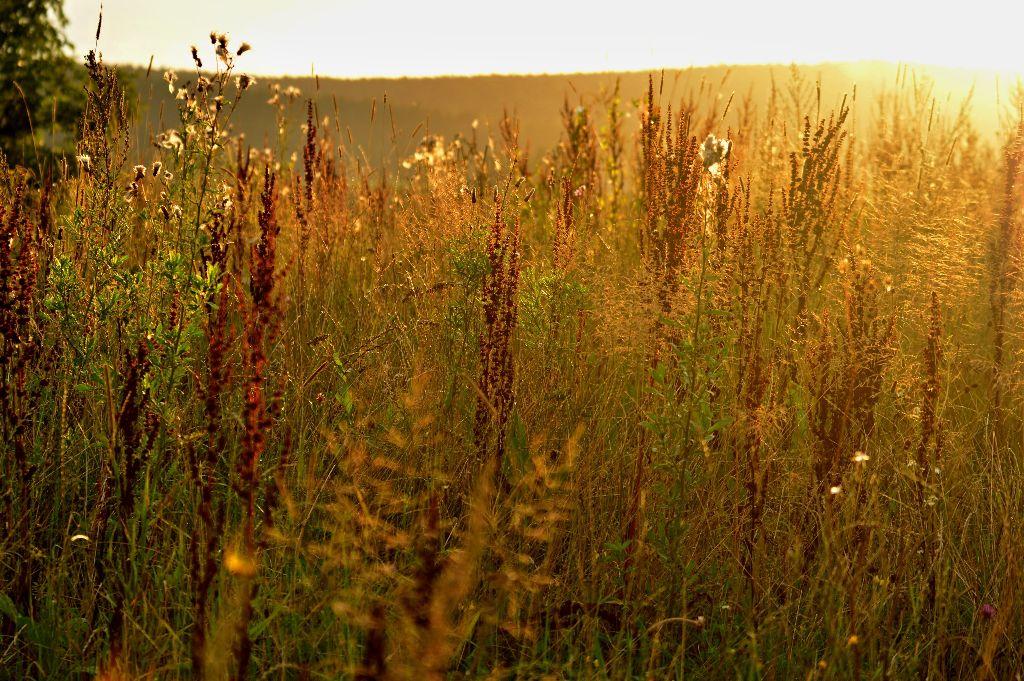 #nature  #colorful  #flower  #sunrise #goodmorning