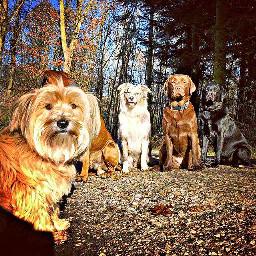 freetoedit animals petsandanimals dogs